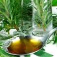 BIG Herb