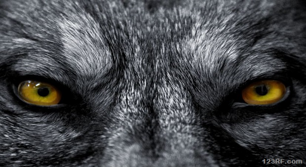 big_spooky animals