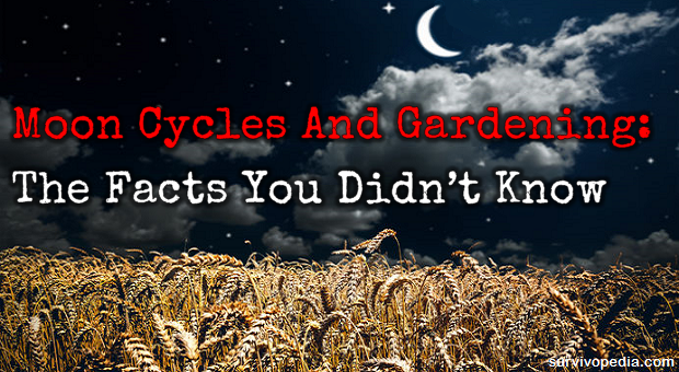moon cycles and gardening