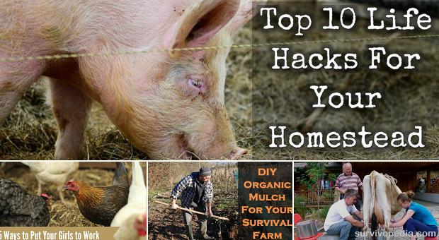 Homestead Hacks