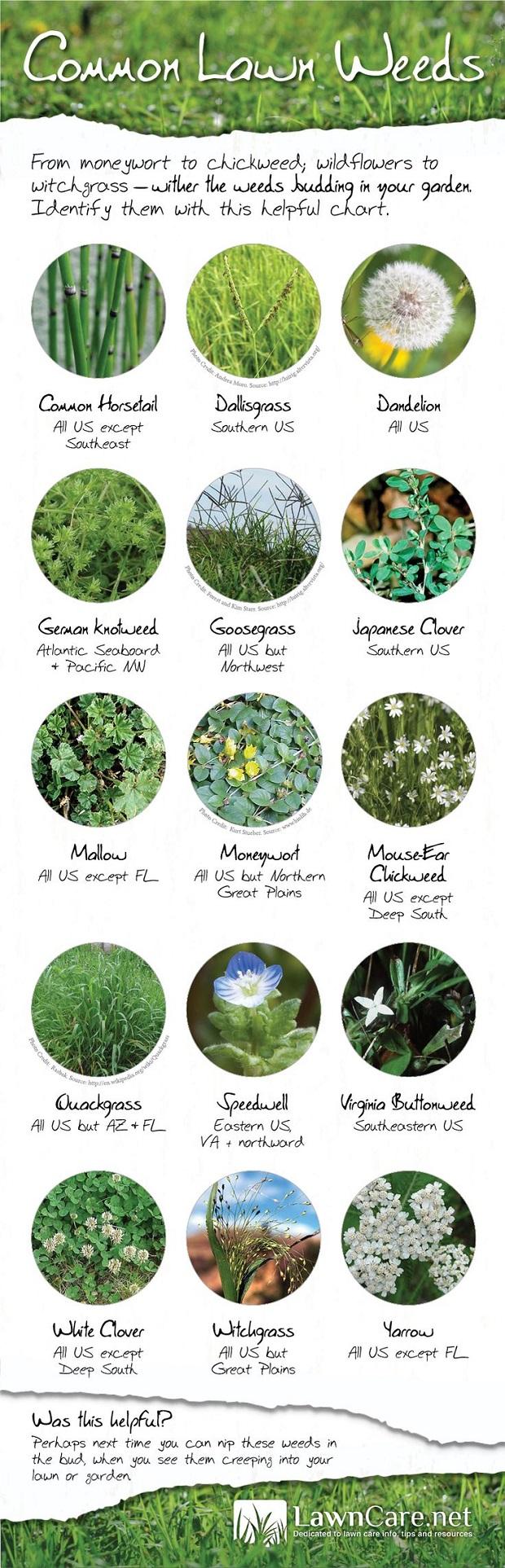 Weeds in your garden