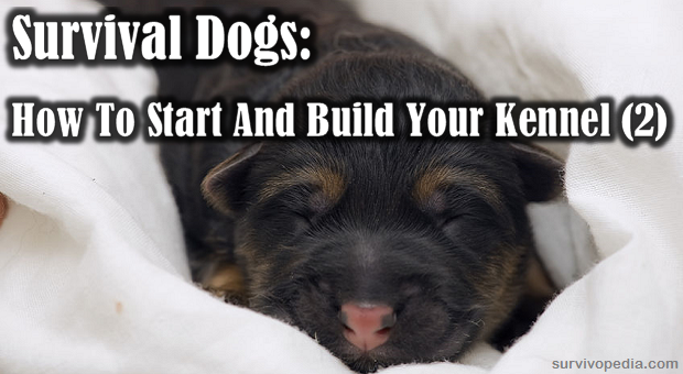 Starting your kennel