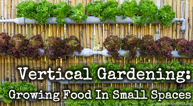 Vertical Gardening Growing Food In Small Spaces