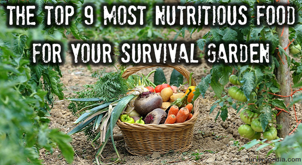 the top 9 most nutritious food for your survival garden