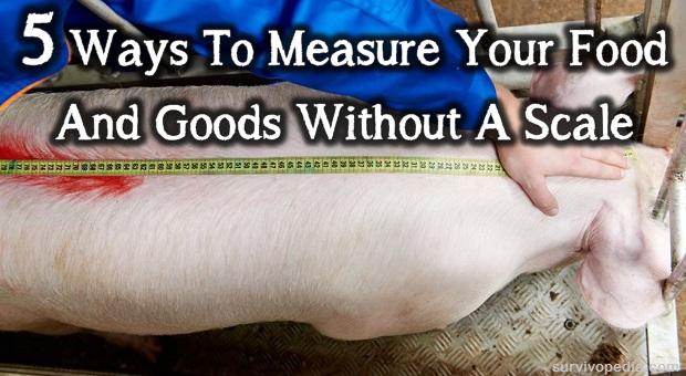 Measure pig