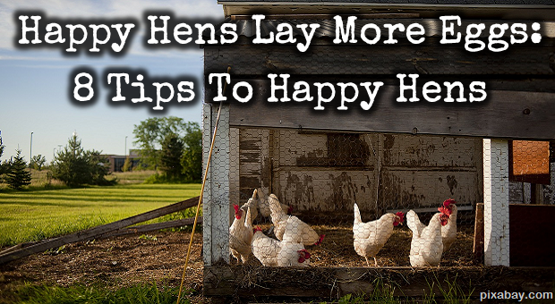 how to get chickens to lay eggs in minecraft