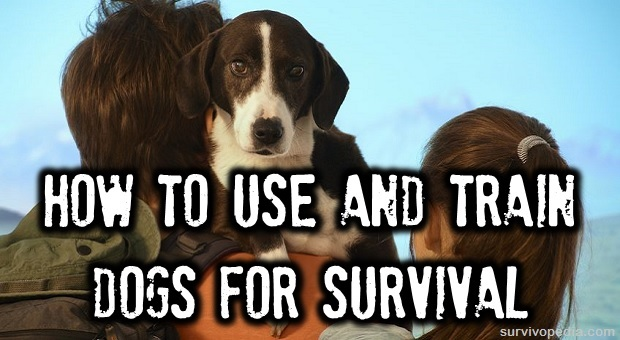 Survival dogs