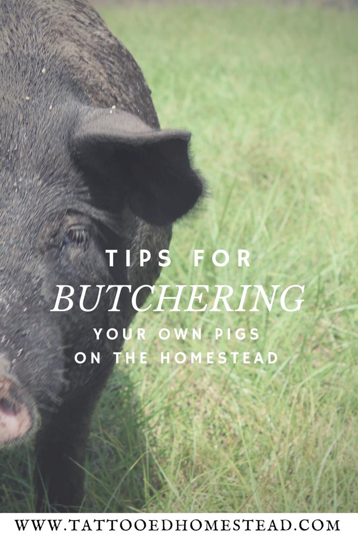 Pig butchering