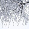 trees-772550_1920