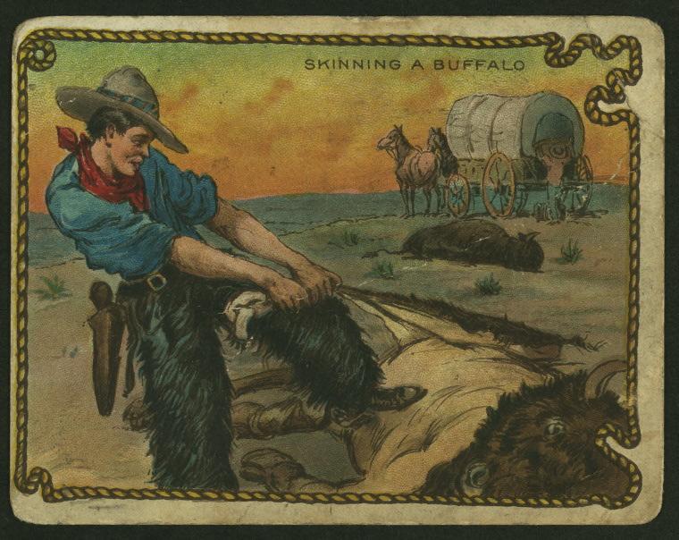 skinning buffalo