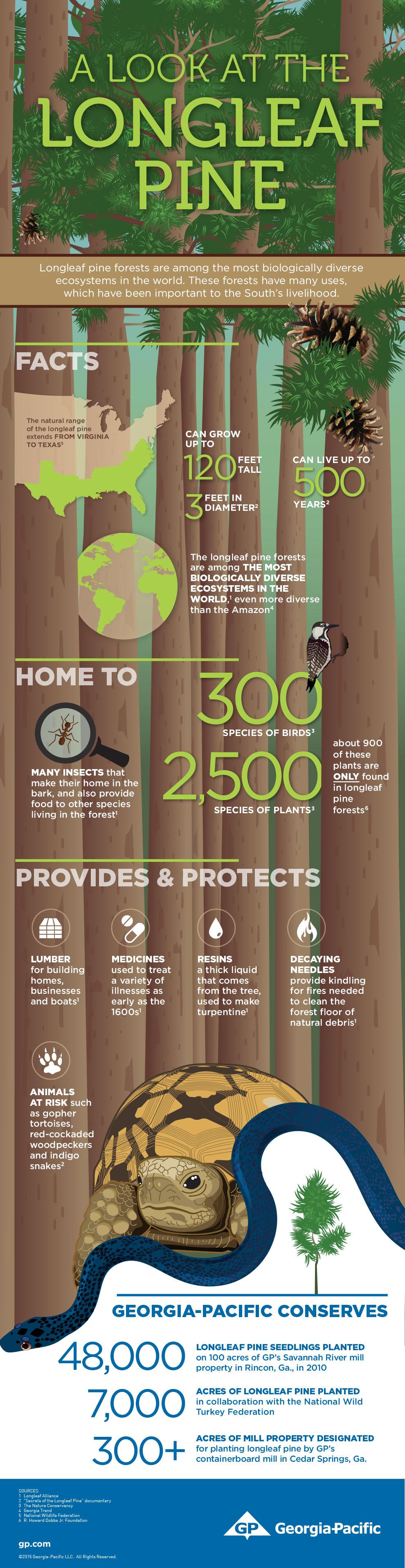 Pine tree infographic