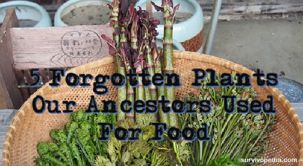 Big 5 Forgotten plants Our Ancestors Used For Food