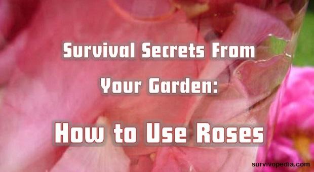 SVP roses for survival