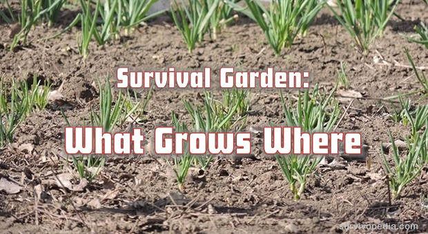 survival gardening what grows where survival