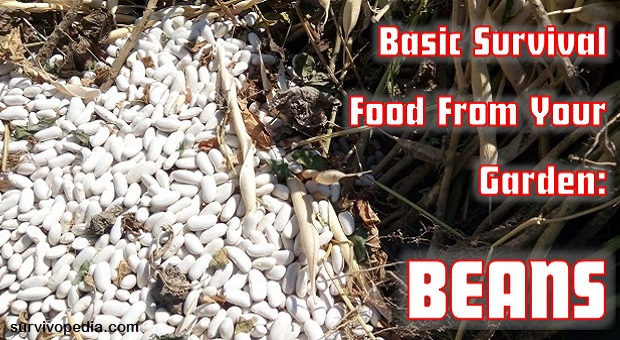 Basic Survival Food From Your Garden: Beans