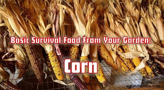 Survivopedia corn
