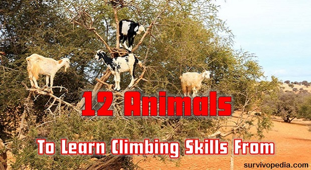 survivopedia-12-animals-to-learn-climbing-tips-from