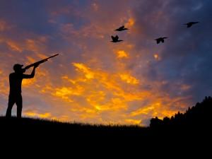 hunting birds on sunset background